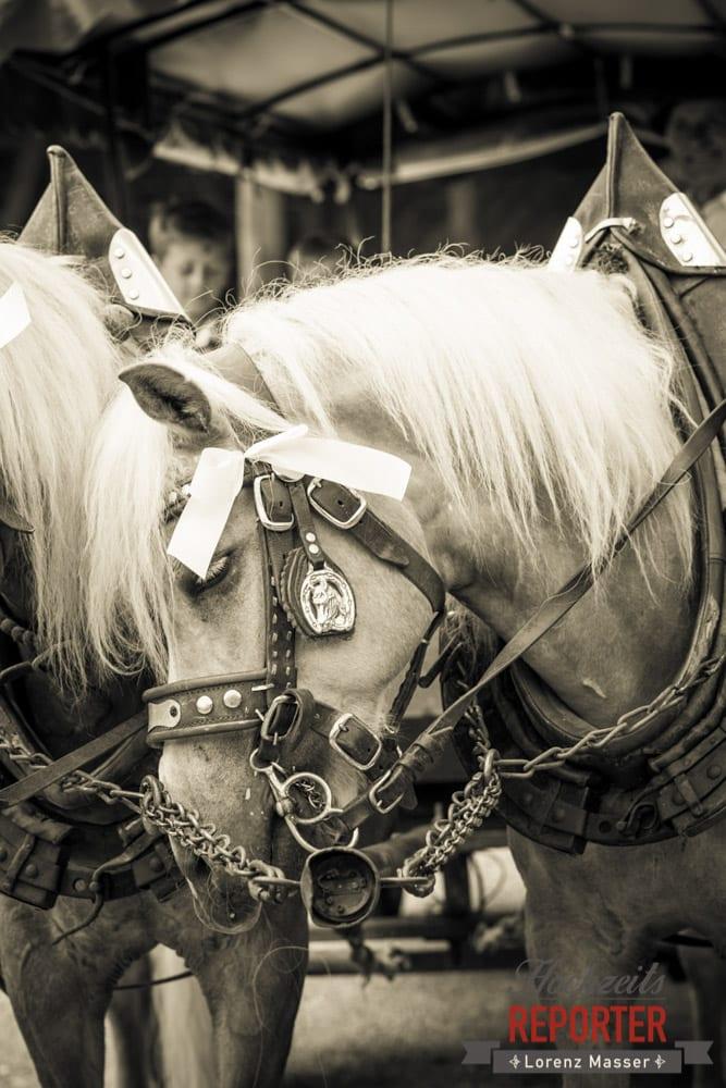 Pferd im Geschirr,  Filzmoos, Hochzeitsfotograf, Wedding Photographer,Land Salzburg, Lorenz Masser
