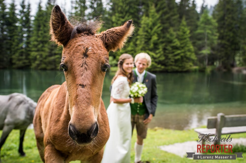 Fohlen crasht Hochzeit, Hochzeit, Filzmoos, Wedding, Hochzeitsfotograf, Land Salzburg, Unterhofalm, Lorenz Masser