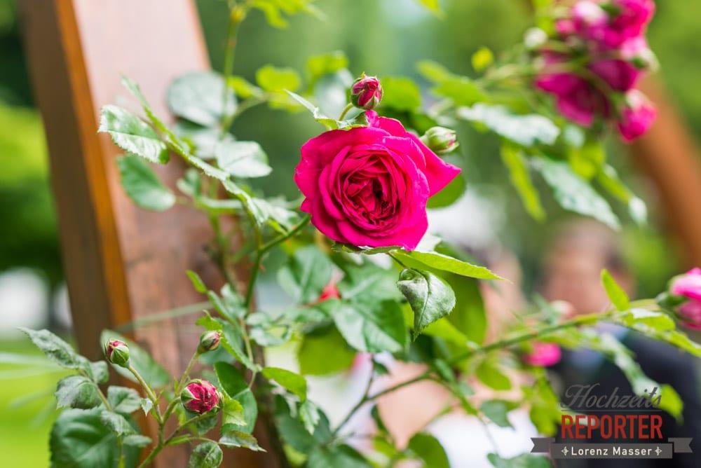 Pinke Rose, Detail Rose, Rose, Standesamtliche Hochzeit, Bad Aussee, Hochzeitsfotograf, Land Salzburg, Lorenz Masser